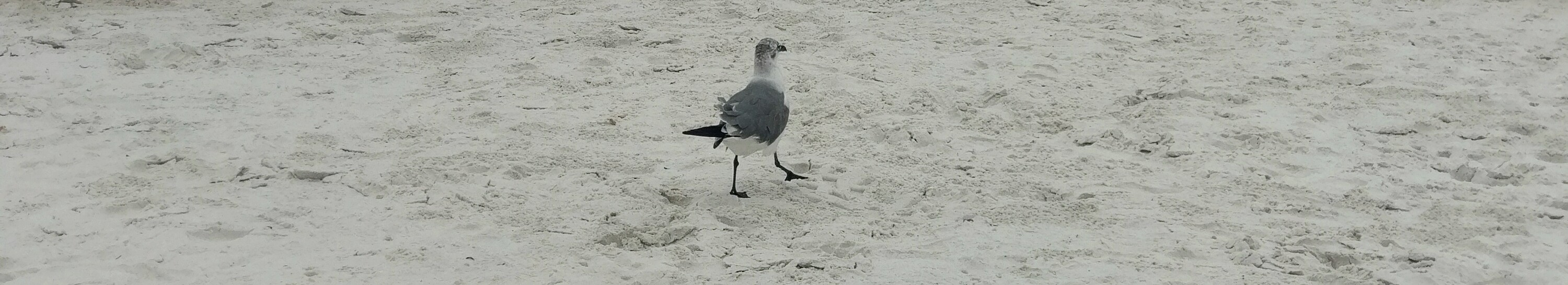 Clearwater Beach, Florida – Autism Kids on Tour
