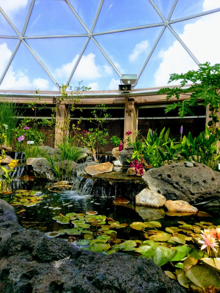 A beautiful garden and water feature