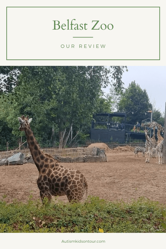 A giraffe at Belfast zoo with the text Belfast zoo our review, autismkidsontour.com