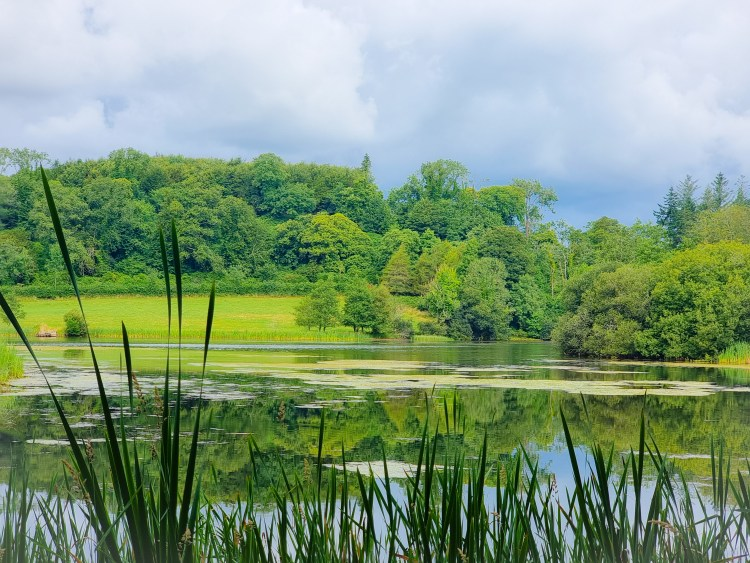 The lake at finnebrogue woods