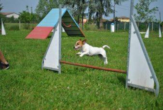 corsi-di-addestramento-per-cani-e1471040406452.jpg