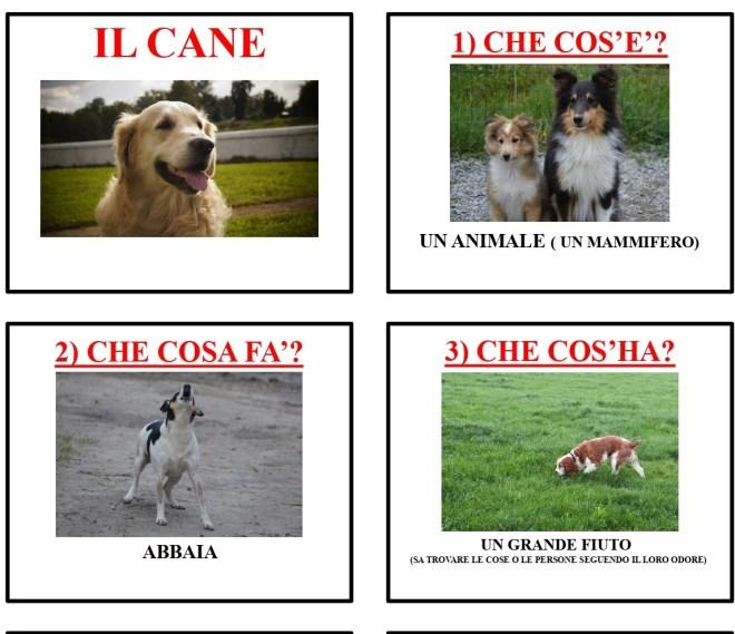 gli animali-i mammiferi_page-0007