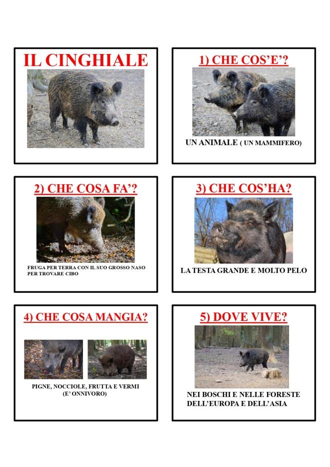 gli animali-i mammiferi_page-0013