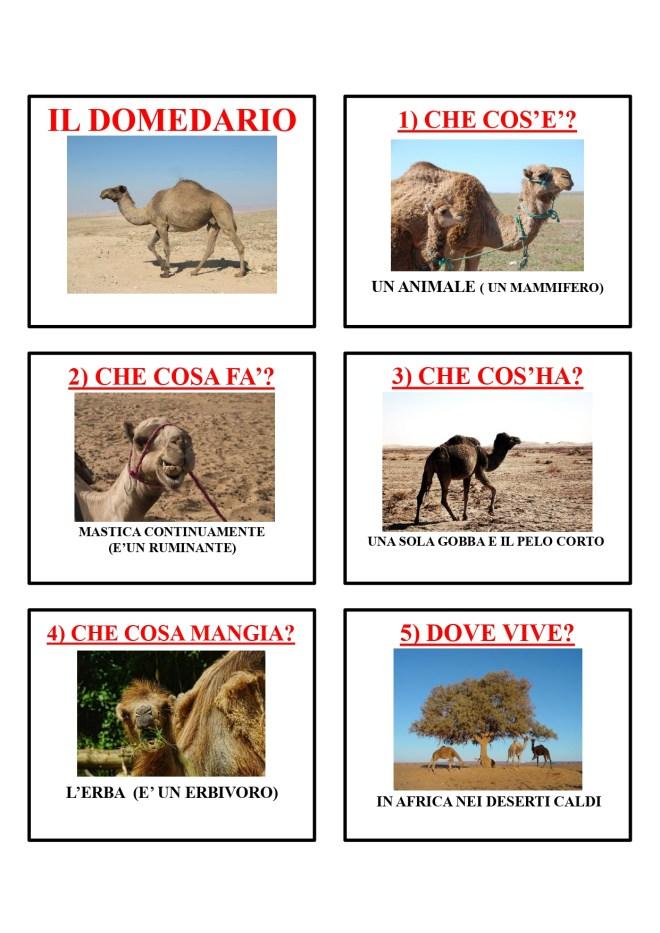 gli animali-i mammiferi_page-0016