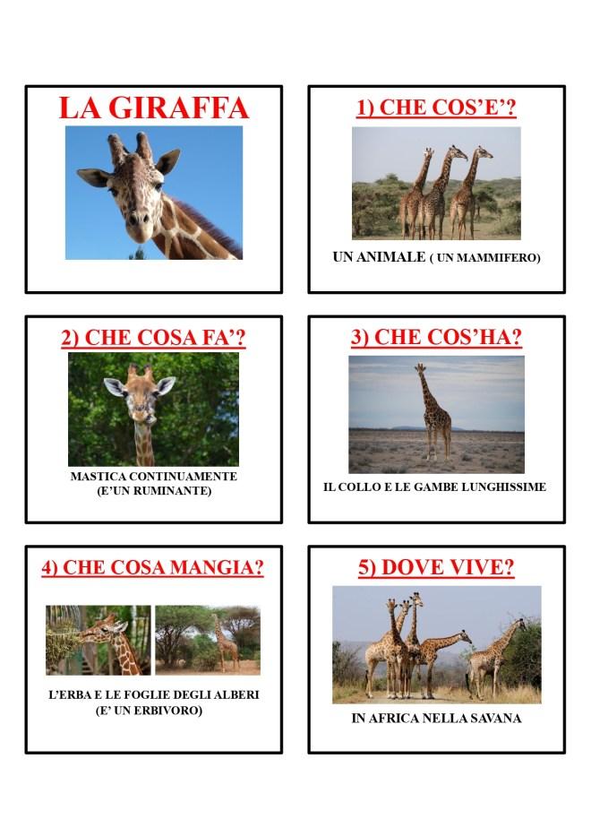 gli animali-i mammiferi_page-0020