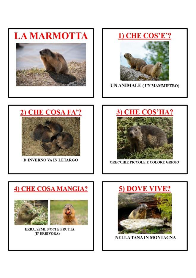 gli animali-i mammiferi_page-0029