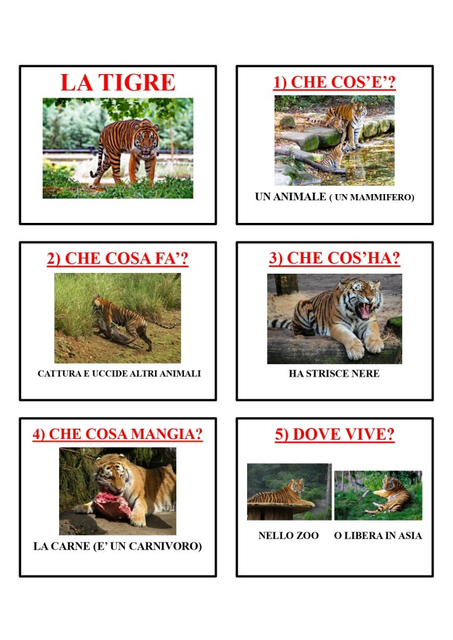 gli animali-i mammiferi_page-0042