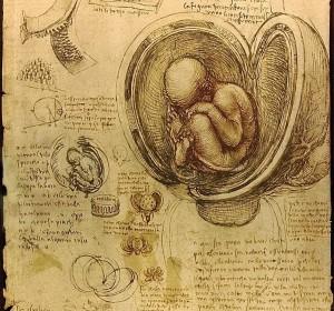 Esquema de un embrión humano - Leonardo Da Vinci