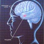 El 'funcionamiento en red' del cerebro humano compensa las lesiones en la región prefrontal