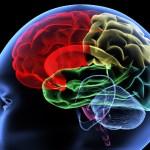 Los orígenes de la hipótesis de inhibición/excitación en el autismo