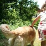 Proyecto de investigación de zooterapia para niños con autismo