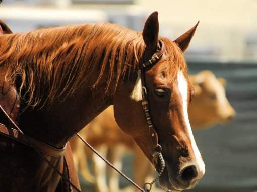 Cavalo - Foto: Pexels