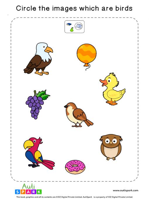 Sort The Birds Worksheet 3
