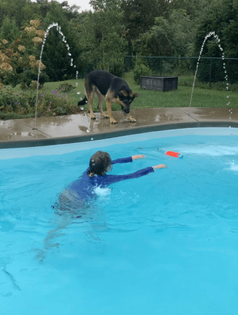 Jess is in a backyard pool reaching for a dog toy.