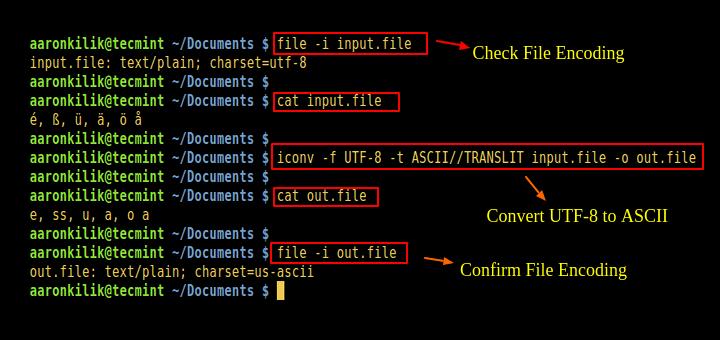 html script type