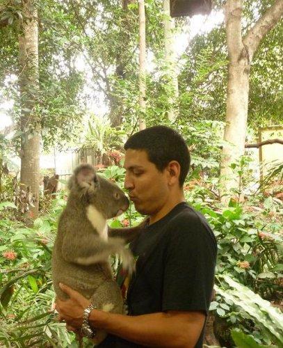 koala lone pine sanctuary