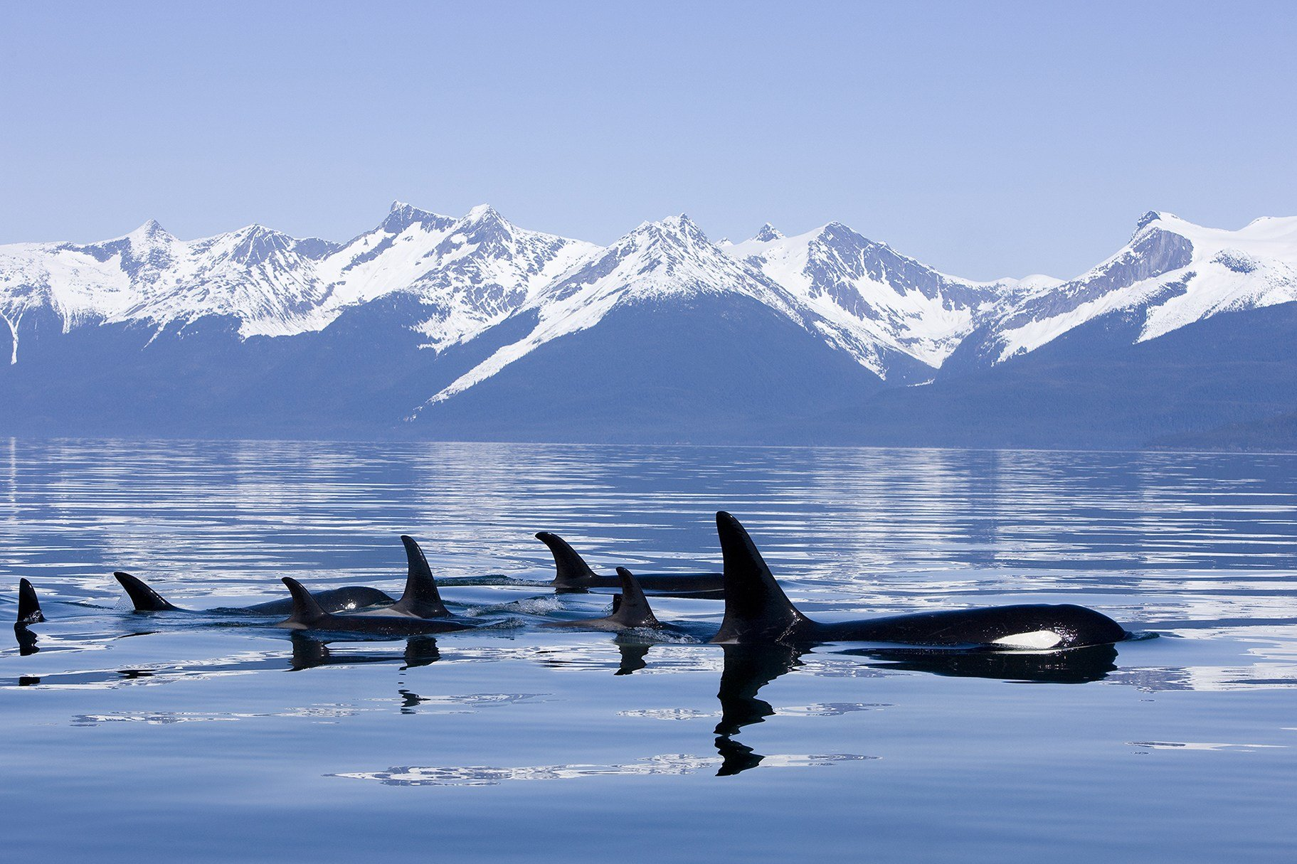 Latest The Best Of Alaska By Boat Top 10 Alaska Cruise Tips Free Download