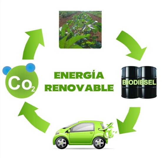 Биодизельное топливо, фото