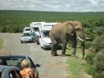 Leje Autocamper Sydafrika