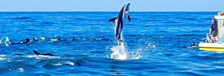 dolphins new zealnd motorhome rental