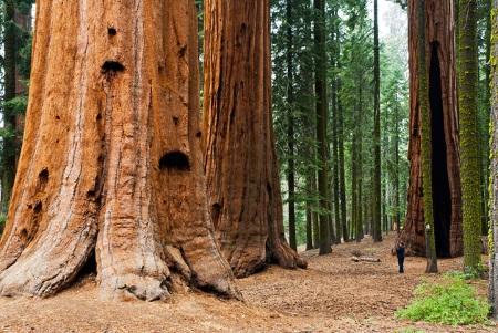 california-sequoia-national-park