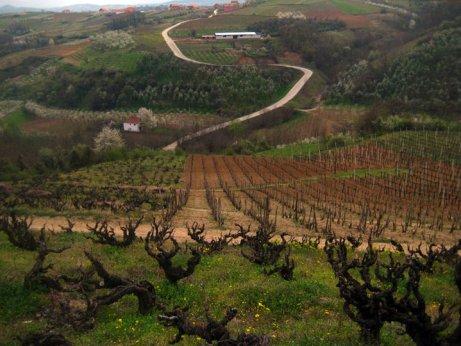 Vinarija Budimir - Vineyards