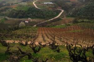 Wine Reviews – Serbia