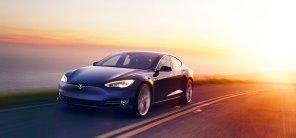 Tesla против гуся: автопилот не дал электромобилю наехать на птицу