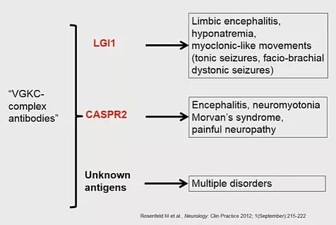 ezgif 4 1b1dfb34ee53 - Antibodies-of-autoimmune-encephalitis