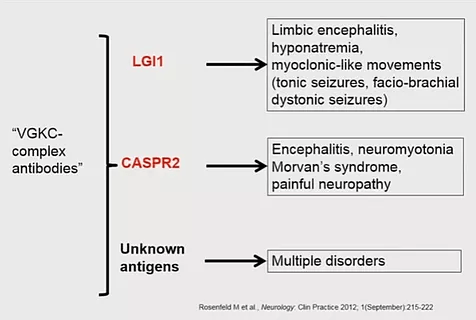 ezgif 4 1b1dfb34ee53 - Antibodies-of-autoimmune-encephalit
