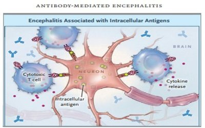 What occurs with an intracellular  antibody