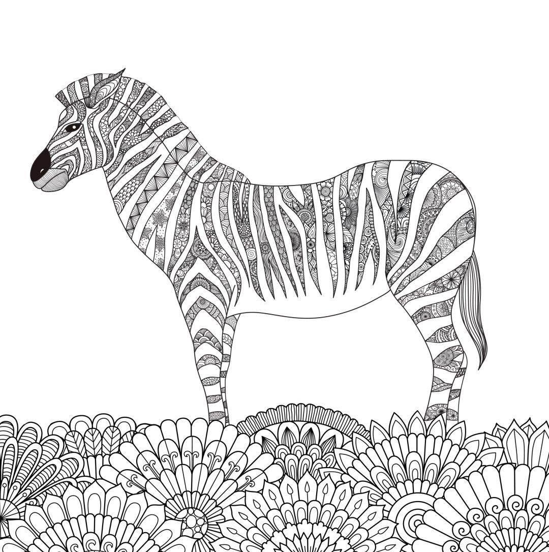 zebra_6