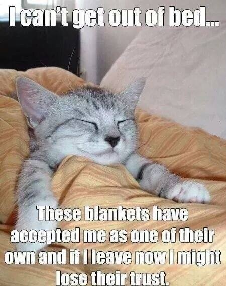 I can't get out of bed_cat