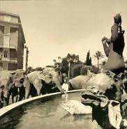 Les éléphants du cirque Pinder en balade dans Nice (archives INA)