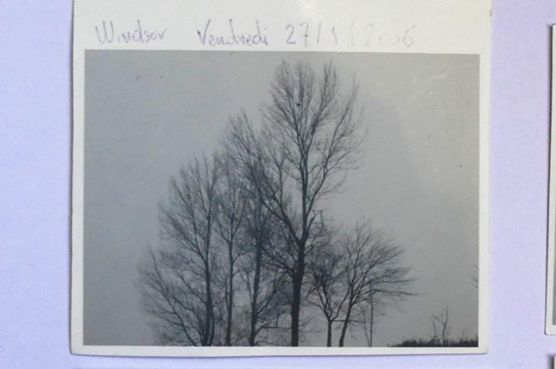 groupe d'arbres sur l'autoroute de Nord le 27/01/ 2006 voyage sur Windsor