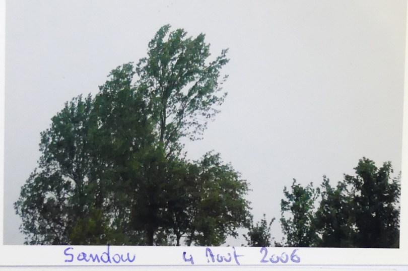 groupe d'arbres sur l'autoroute de Nord le 4/08/2006 voyage sur Sandown
