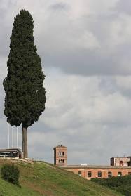 Rome et et sa végétation
