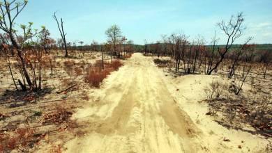 Photo of La Extreme E correrá en la Amazonia
