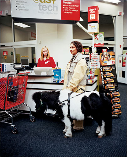 Ann Edie and her guide miniature horse, Panda, checking out at Staples.