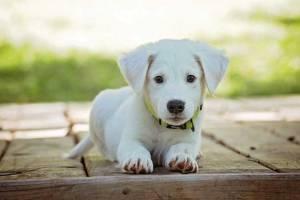 Sorvete para cachorro | Dicas de como revender comprando no atacado