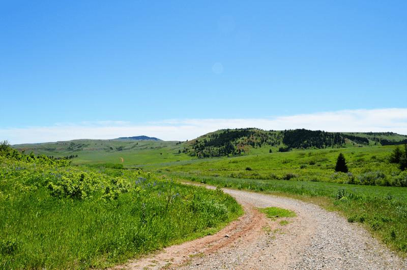 grannie geek pryor mountains montana