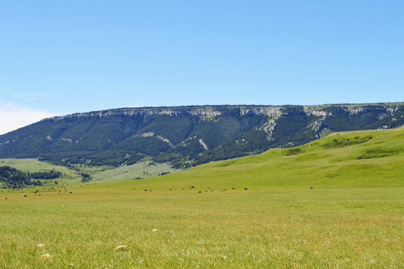 grannie geek pryor mountains cows
