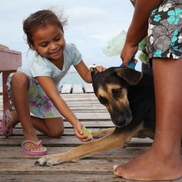 Children attempt to feed limes to their pet dog. The dog has a medical condition which is apparently helped by lime juice. Photo: Alex Washburn