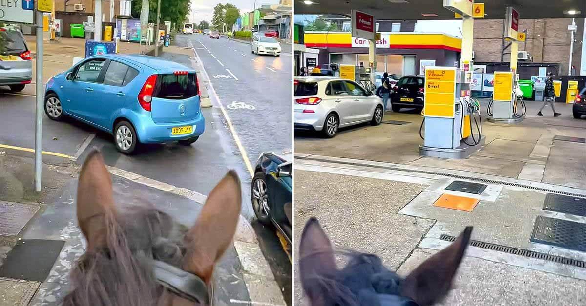 всадник на лошади троллит водителей в очереди на бензин - Мотор