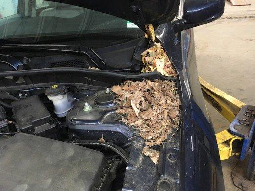 Image result for car upholstry damage by Pests