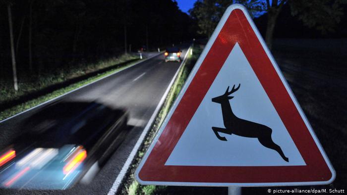 Дорожный знак Осторожно, дикие животные