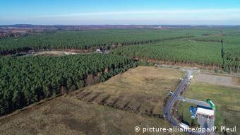 Лесной массив в Грюнхайде
