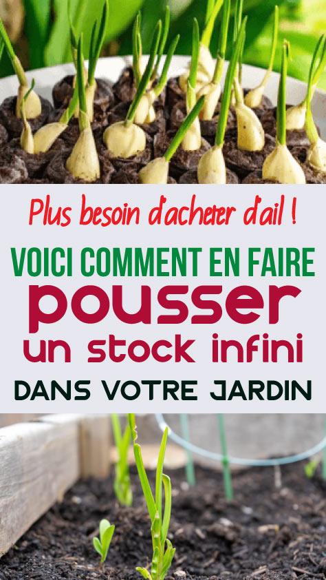 Faire Pousser De L'ail : faire, pousser, l'ail, Besoin, D'acheter, D'ail, Voici, Comment, Faire, Pousser, Stock, Infini, Votre, Jardin