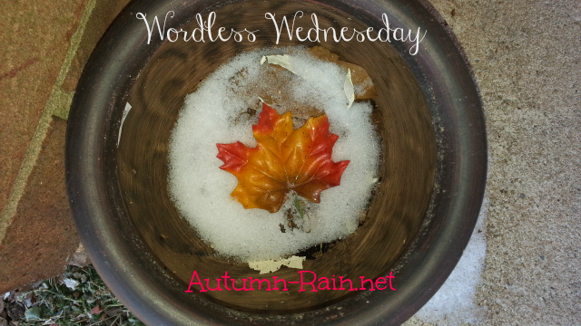 Wordless Wed: #BESOCIETY #WordlessWedneseday  Fall Leave & Snow Edition