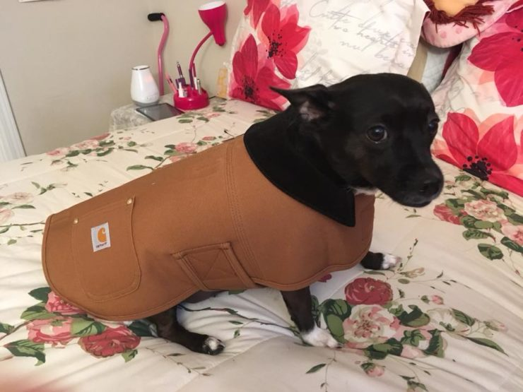 Holiday Gift Guide Review: Carhartt Chore Coat for Dogs #review #sponsored #ad #carhartt